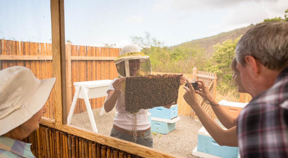 KonaFarm Photo Tour Looking Through Screen At Bees Jcpg